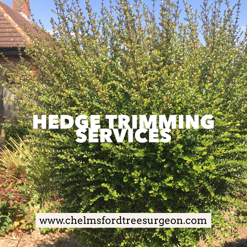 Hedge Trimming Services in Boreham