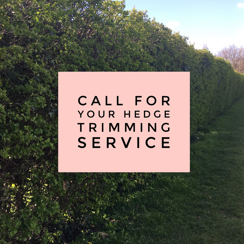 Hedge Trimming Services for Newney Green