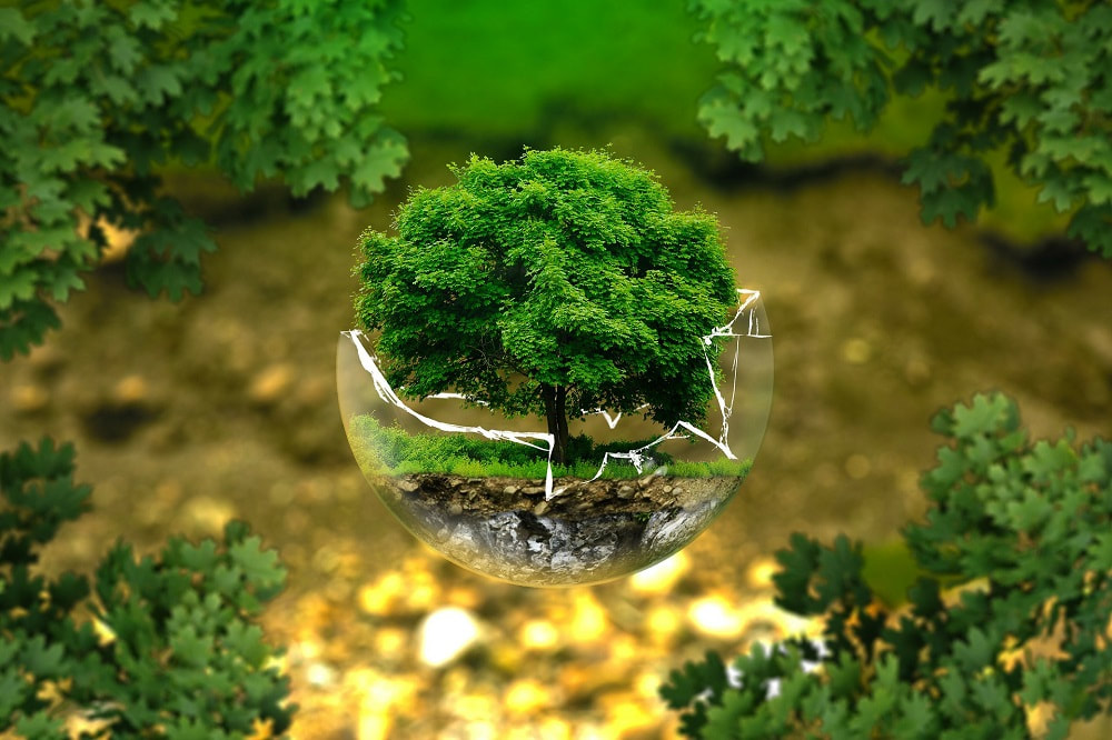 shrunken tree in a half broken glass bowl